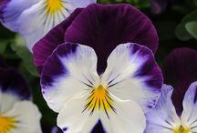 1 Garden Flowers / by Audrey's Cozy Crochet