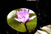 photographs natur