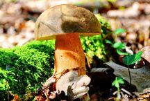 Svampar / Olika sorters svampar