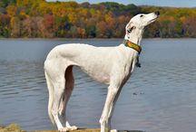Greyhound Love / by Ashley 'Sheridan' Clampitt