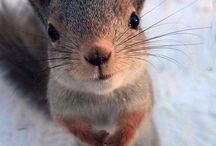 Heartwarming animal photos