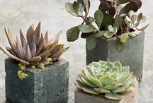 Succulents / by Sandra Waldon