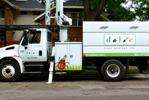 Denver Tree Care Services / Caring for residential and commercial area Trees in Colorado
