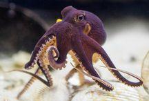 organisms under the sea