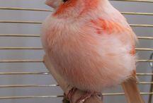 Small Fat Birds