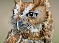 Owls ; )