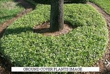 ground covering ideas