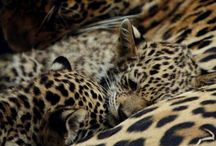 animal print love