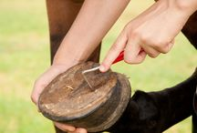 Keeping your horses hoves heathy