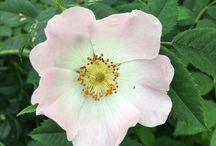 Blooming Marvelous / Flowers