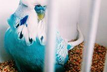 Ucceli