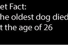 Pet Facts