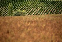 "Montalcino - Tuscany / A day trip to Montalcino and the ""Castelgiocondo estate"" (Siena, Italy)"