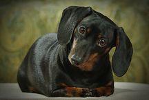 Doggies / by Shana Walker