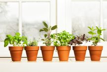 window sil herbs