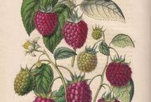Laminas botanicas