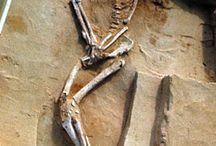aussie archeolegy
