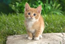 Animals / Animals HD Wallpapers ready to download for Free.