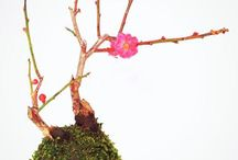 Tito moss & flowers