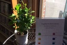 Early spring displays in the Lawrence Library, Pepperell MA