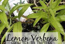 Herbs & uses