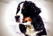 pups / by Le Petite Bain