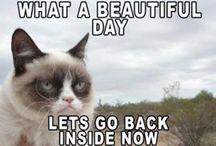 Mr. Grumpy cat / Just for the fun