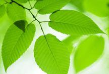 Austin Journal of Environmental Toxicology