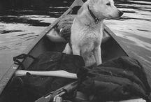 Koirat ja luonto