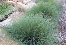Aussie garden landscaping ideas