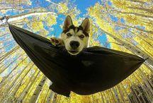 Dog Instagram ideas