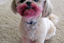 MAKE-UP DOGS & PETS