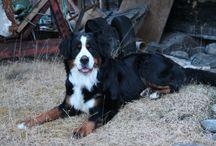 MAX / My dear dog