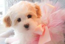 cutie / by Lyn Muddle