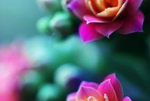 Květiny a rostliny