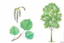 drzewa i ich owoce