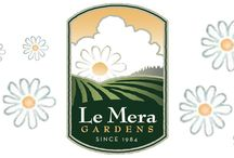 Le Mera Gardens / wholesale grower of fresh cut organic flowers, serving southern Oregon & northern California