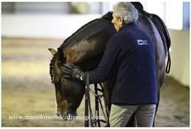 horses / jeździectwo, hodowla, dobrostan