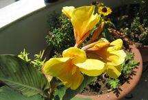my flowers / FLOWERS IN MY BALKONY