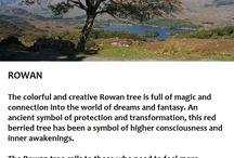 Trees in mythology