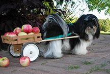 I Heart Dogs! / by Lisa Angelettie