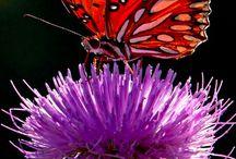 Perhoset, sudenkorennot ...