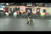 Canine HWTM