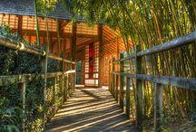 Jardin japonais - Compans-Caffarelli - Toulouse / Photos prises au parc de Compans-Caffarelli à Toulouse