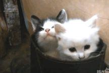Cat Animated Gifs / FunnyStatus.com presents Cat Animated Gifs.