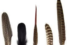 Feathers / Beautiful Feathers