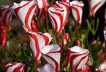 coolplants : perennials