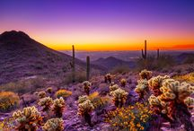 Scottsdale Sights / Scottsdale lifestyle, culture and landscape.