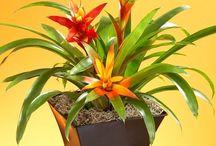 Zimmer - Pflanzen
