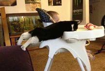 Kocie fotki z przymrużeniem oka / Takie tam zabawne obrazki o kotach